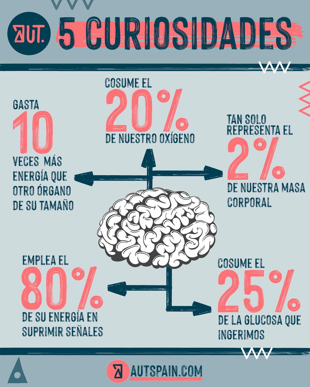 Curiosidades del cerebro para entrenarlo